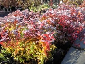 ochrona sadu przed pierwszymi jesiennymi przymrozkami